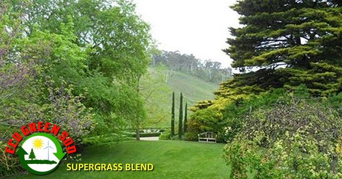 Supergrass Blend